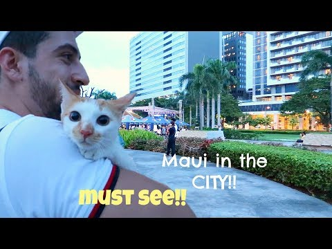 Bringing my INDOOR KITTEN in a busy city!! What's his reaction?? Puspin Maui boy!!