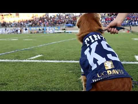 This dog retrieves kicking tees at UC Davis football games   ESPN