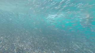 Cirò Marina, Punta Alice