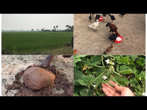 A day in our village vlog village vlog