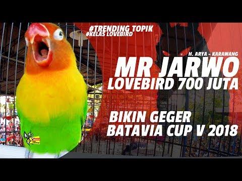 BATAVIA CUP V 2018 : BIKIN GEGER ! LOVEBIRD 700 JUTA, JARWO KONSLET JADI TONTONAN PESERTA