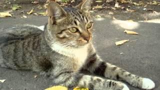 Кот большие глаза нос усы белые лапки