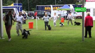 Cocker Spaniel Wins At Windsor Dog Show