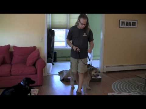 Solid K9 Training Downstay how to