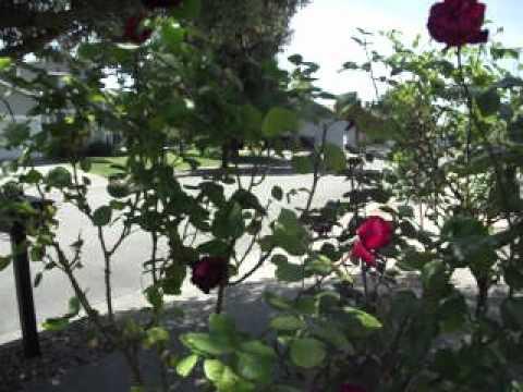 Rose garden tour, California