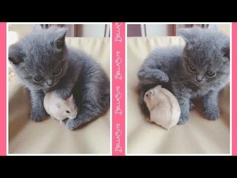 Cute Cats Doing Funny Things Compilation 2018 - Vidéos Drôles De Chats #P3