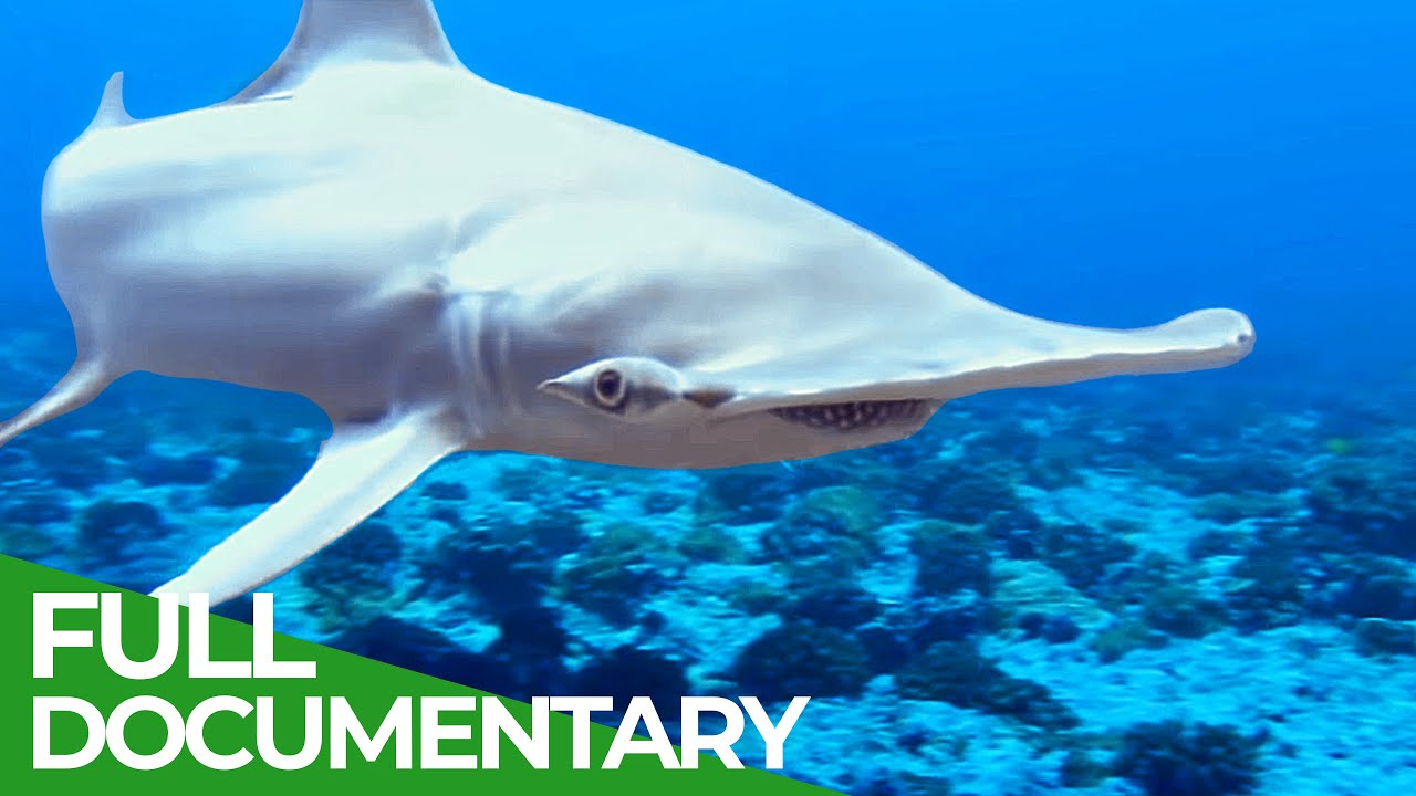 Adventure Ocean Quest: Shark Paradise of Polynesia | Free Documentary Nature