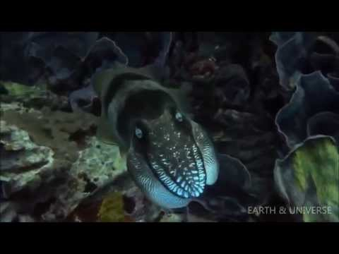 Encountering Sea Monsters - Ocean Wonders | Earth & Universe | NEW 2014
