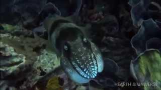 Encountering Sea Monsters - Ocean Wonders | Earth & Universe | NEW 2014