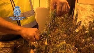 Desmantelado un grupo dedicado al cultivo indoor de marihuana para su exportación al extranjero