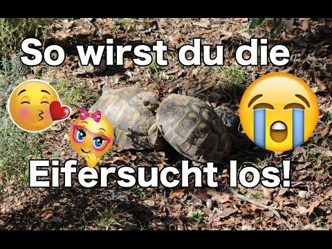 Das BESTE Mittel gegen Eifersucht & Neid - Ein lustiger Versuch!