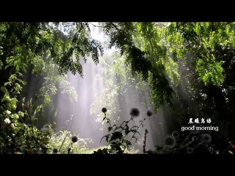 good morning bird sound 晨曦鸟语sunshine and mist