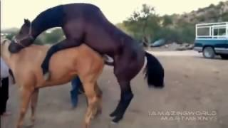 Video caballo apareamiento primera vez muy fácil download MP3, 3GP, MP4, WEBM, AVI, FLV September 2018