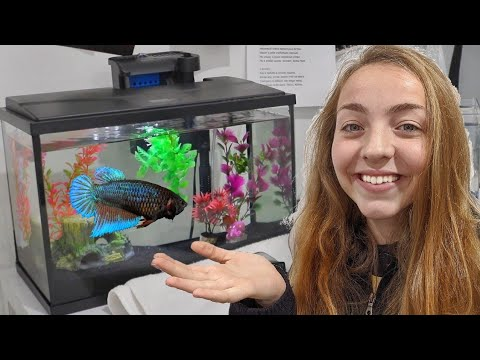 BETTA FISH TANK UPGRADE From 1.5 GALLON To 5.5 GALLON | Jeffa *LOVES* Her New Home! |Julia & Olga|