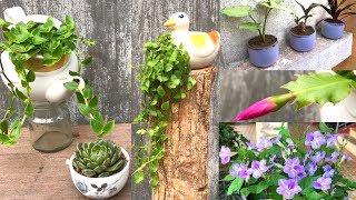 6 Maneiras de Reciclar Móveis Antigos em um Lindo Vaso de Flores