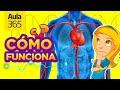 ¿Cómo funciona el Cuerpo Humano? | Videos Educativos Aula365