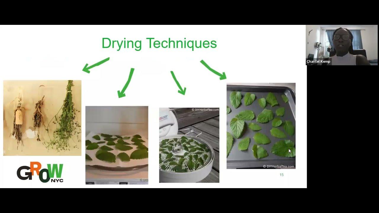 Garden Herbs and Natural Remedies (Virtual Workshop)