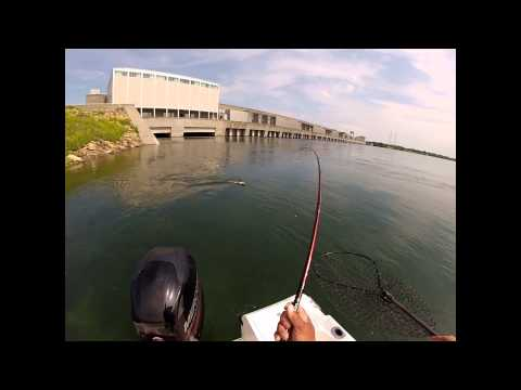 A nice St Lawrence River Muskie caught on cam with a Go Pro