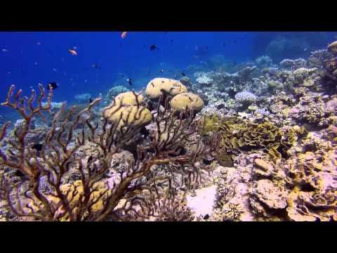 "Dive in Jordan, Aqaba: ""Japanese Gardens"" 12.09.2013"