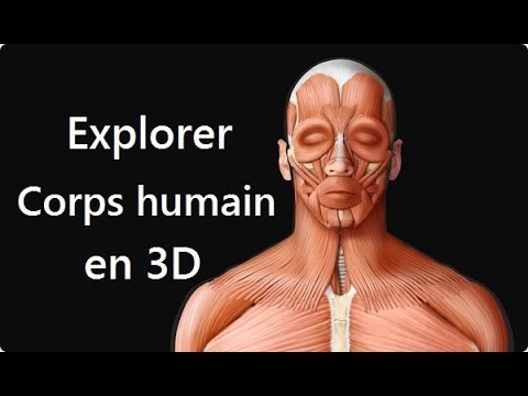 Anatomie du corps humain en 3d for Interieur du corps humain image