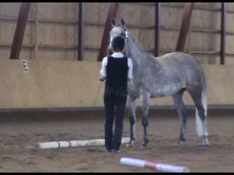 Finnish Riding pony mare A.T. Gamilah (born 2005) stud book inspection incl. riding test