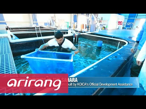 Business Daily _ Shrimp farming in the desert