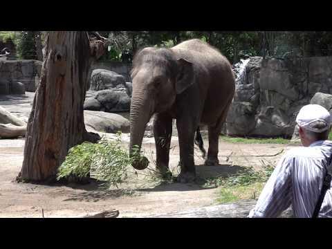 Auckland  Zoo 22 12 2017 The Elephant
