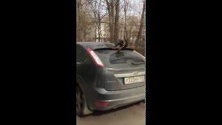 кошка на крыше автомобиле