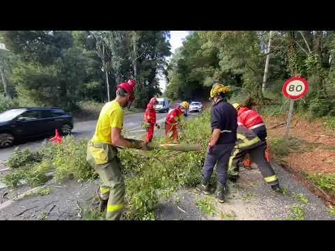 La caída de un árbol corta la N550 entre Redondela y Porriño