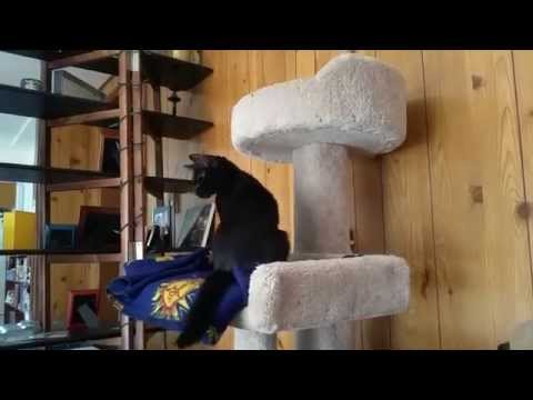Zelda the Blind Black Cat escapes a basket
