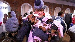Корги, Дог и Три поросенка! Выставка о собаках в Питере.