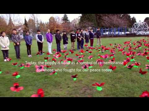 Ms. Pace Division 6 - Poppies Installation at Vancouver City Hall