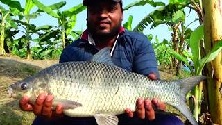 Rare Species Of Strong Rohu Fishing Videos By Using Fish Hooks