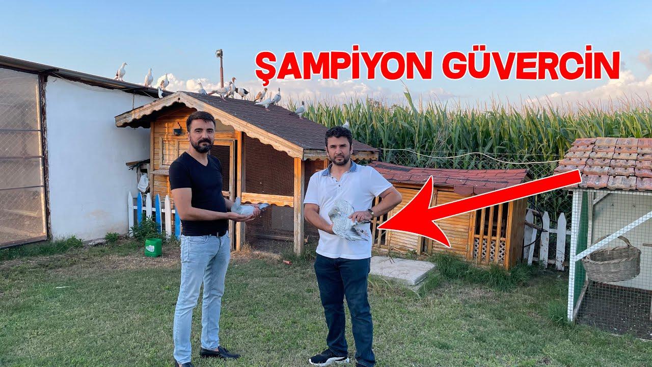 Türkiye Şampiyonu Güvercin Yetiştiriyorlar Böyle Çiftlik Görmedim