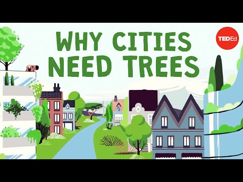 Video image: What happens if you cut down all of a city's trees? - Stefan Al