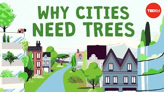 What happens if you cut down all of a city's trees? - Stefan Al