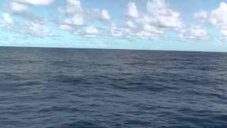 Доминикана. Большая морская кожистая черепаха в море.