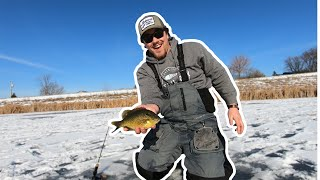 Ice Fishing for GIANT Bluegills in Neighborhood POND