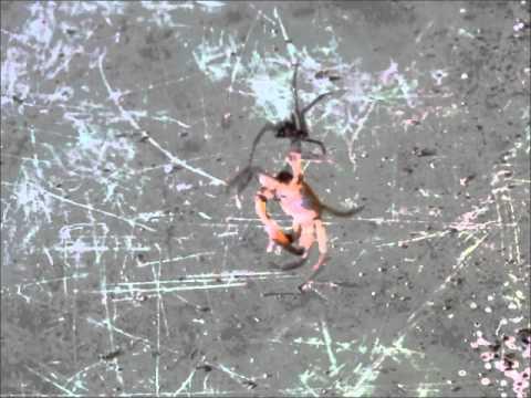 の に 蜘蛛 引っかかる 夢 巣