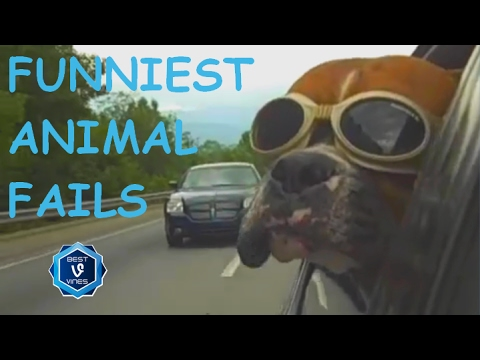 Try Not To Laugh Challenge | Funny Animal Fails Compilation - Best Cat, Dog Fail Vines 2017
