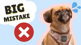 TOP 5 REASONS NOT TO GET A PUGALIER (PUG x CAVALIER) || SMALL DOG BREED