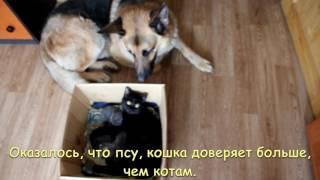 Как кошка с собакой.