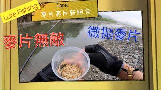 聽說麥片釣捲很厲害!來菜園試試看 (路亞/捲仔/何氏棘魞/Taiwan Masheer) (201903)