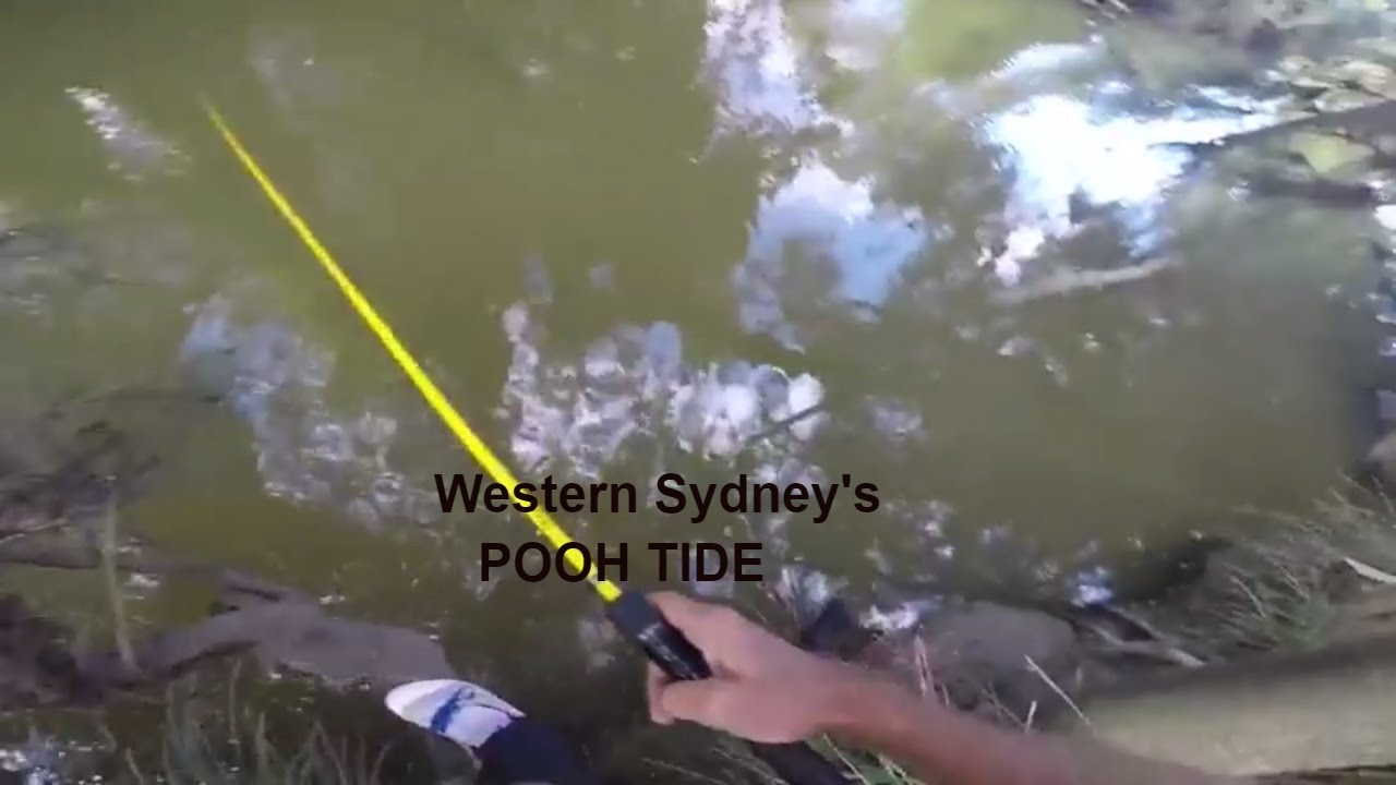 2017 fishing tips and techniques western sydneys pooh tide 2017 fishing tips and techniques western sydneys pooh tide hunting for bass with tiemco cover bug nvjuhfo Gallery