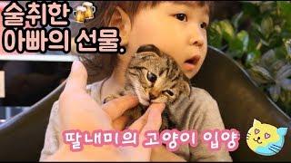 술취한 아빠의 선물. 스코티쉬폴드 고양이 입양.