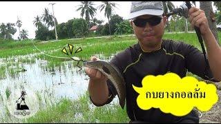 Repeat youtube video Fishonshop.TV Vol.15 : กบกอลลั่ม หมายนาน้ำท่วม