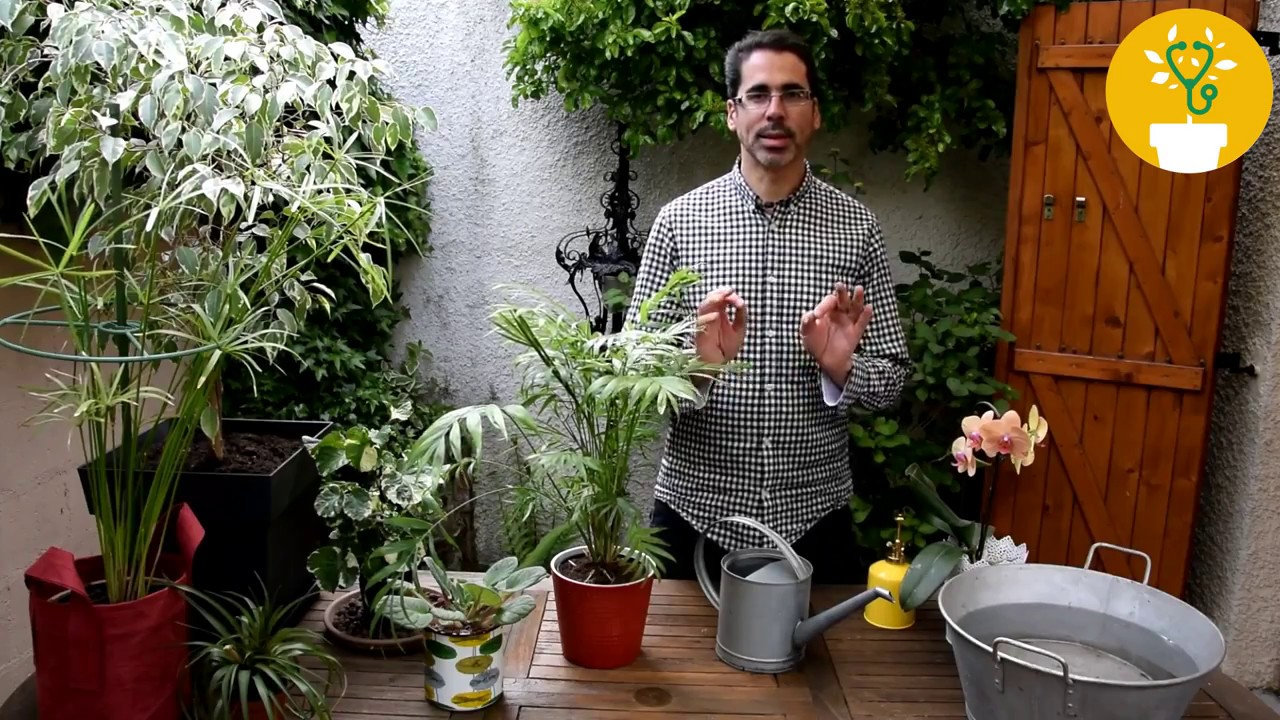 Arrosage Pour Plantes En Pot comment arroser ses plantes en pot ?