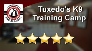 Tuxedo's K9 Training Camp  Rochester Perfect Five Star Review By Thomas Z.