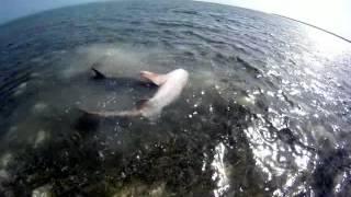 Shark Porn 3