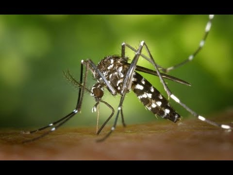 How To Find And Kill That Single Mosquito Buzzing Around Your Room